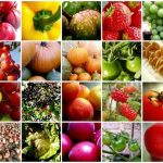 fruit-vegetable-mosaic1