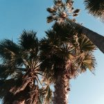 { pretty palms outside the new-ish place }