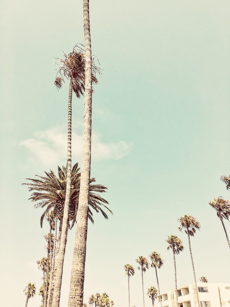 { classic LA street . covered with palms }